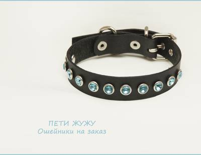 Dog collar blue chaton rivets
