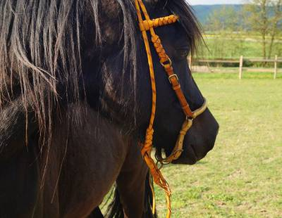 Horse halter yellow
