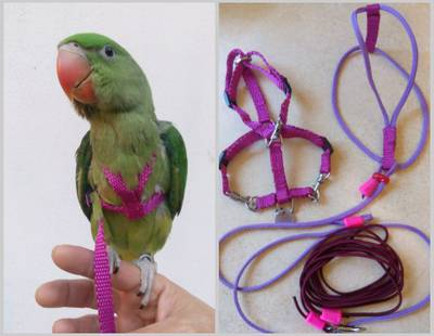 Bird harness