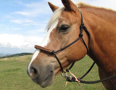 Bridle VARIANT