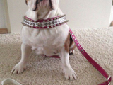 Dog collar and leash Desi-art