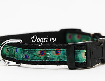 Dog collar peacock feather