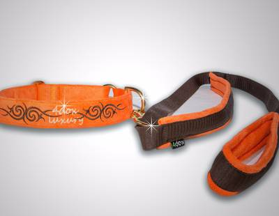 Dog collar with leash orange