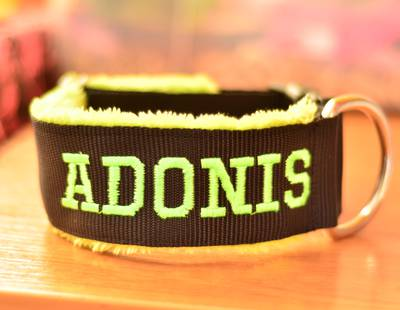 Martingale collar with embroidery