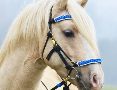 Paracord horse halter