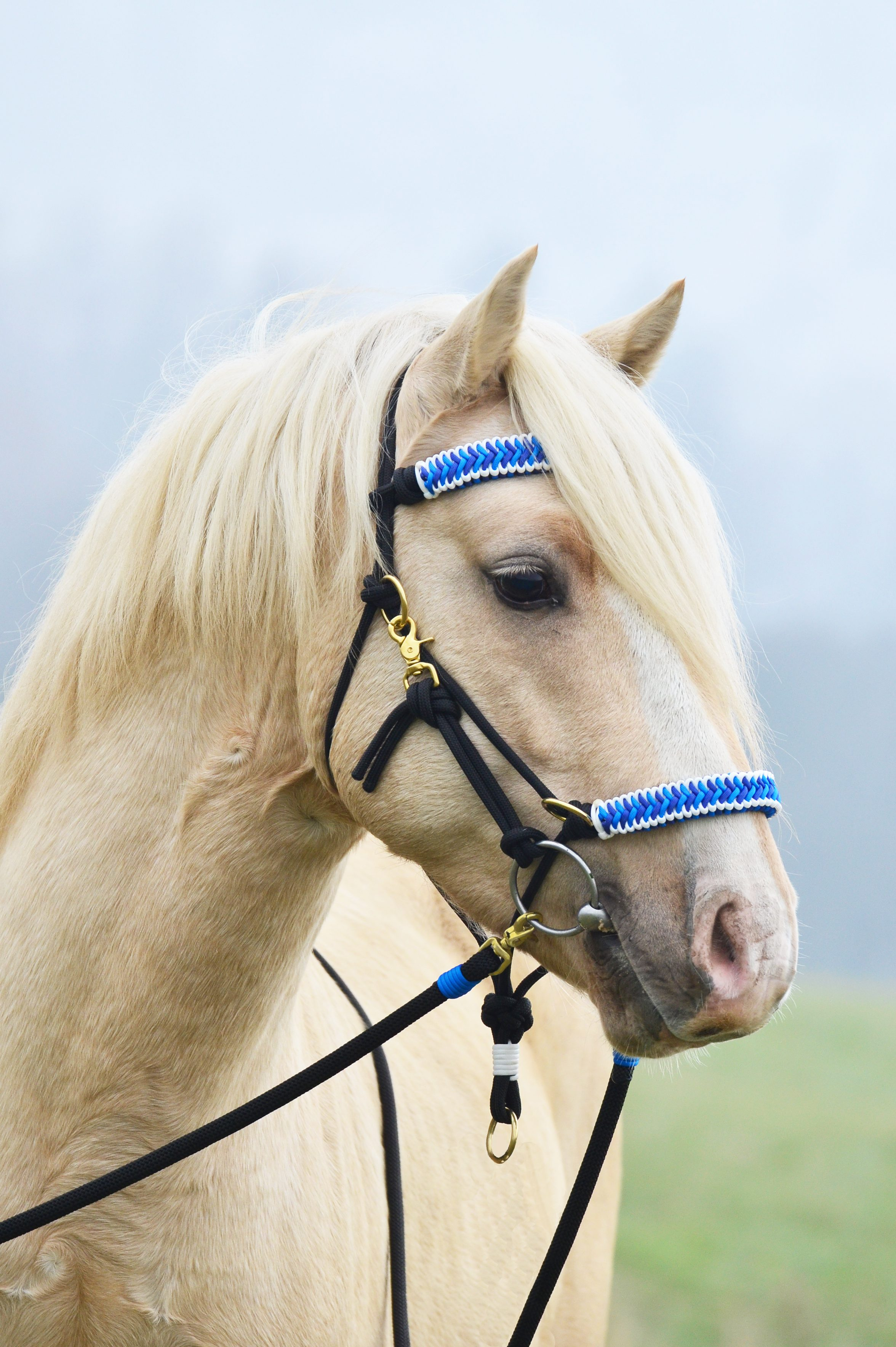 Paracord horse halter for Paracord horse bridle